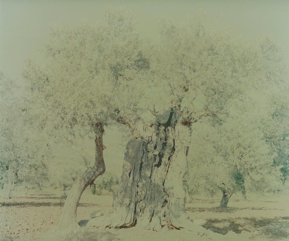 olive 10