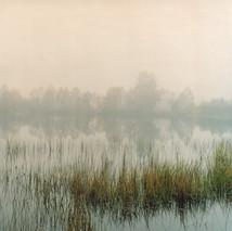 Swamp #01