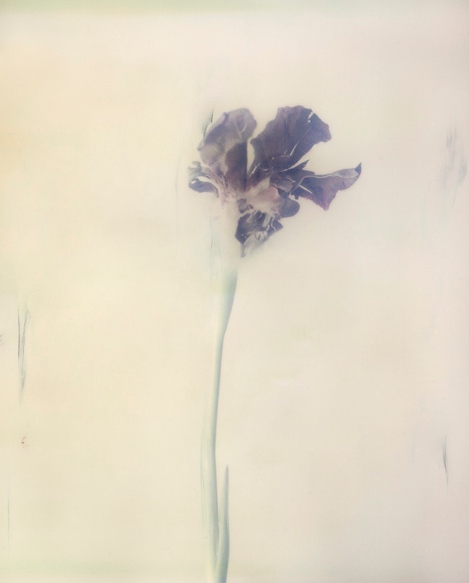 Iris P01