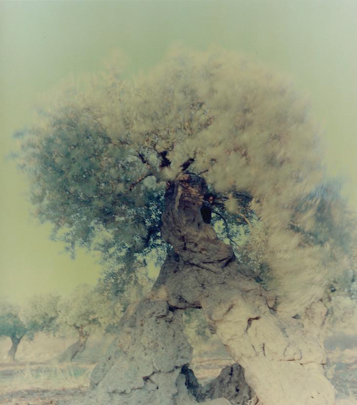 olive 09