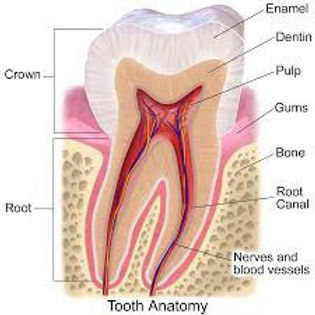 Periodontal (Gum) Treatment