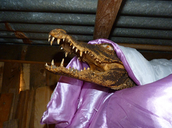 Chacal et le crocodile