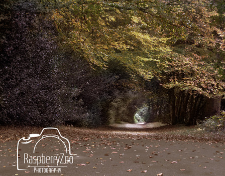 Forever Autumn-Sutton Park