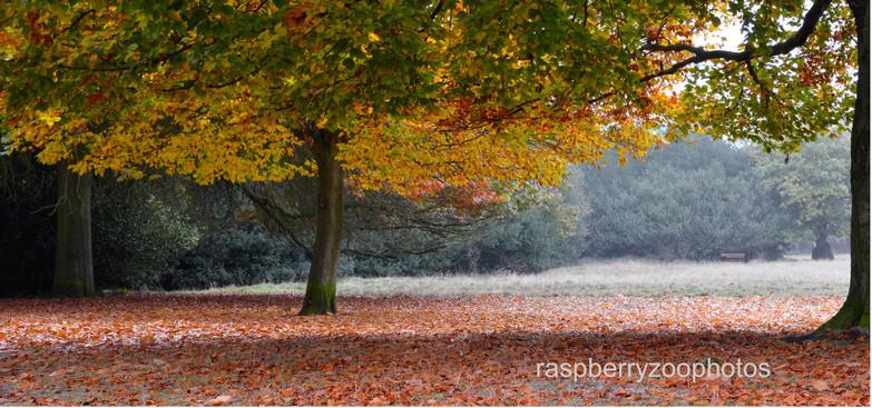Autumn - Sutton Park