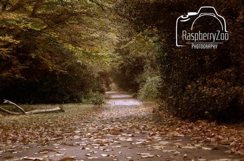 Walk in the Woods Sutton Park