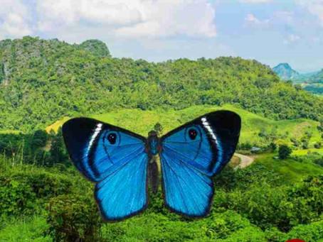 फेंगशुई के अनुसार घर में तितलियों की तस्वीर रखने के होंगे 5 फायदे