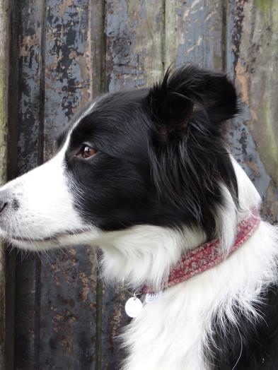 Dog Collars - Coming Soon!
