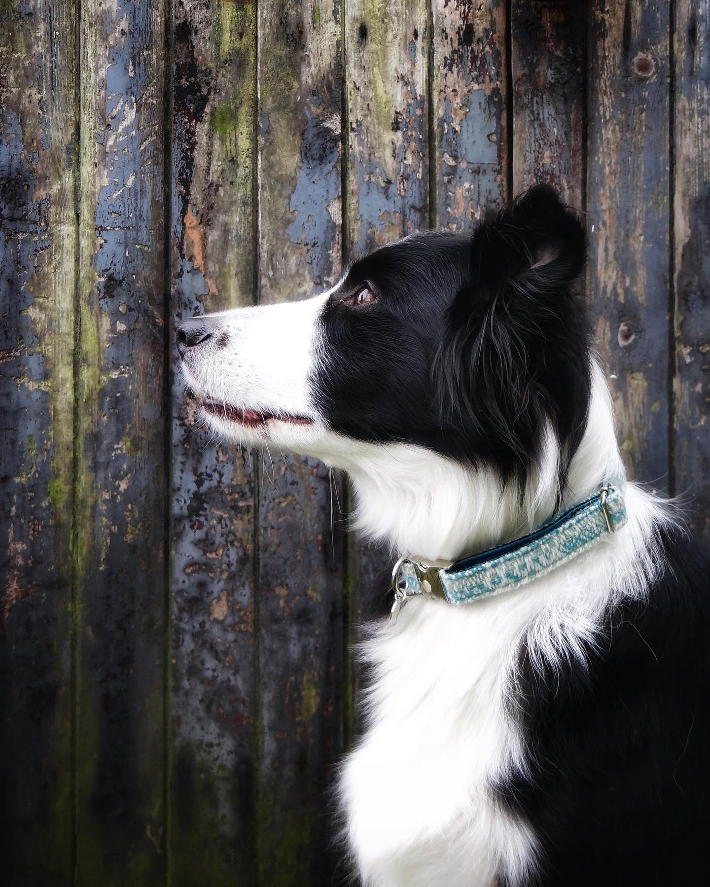 Bespoke Dog Collars