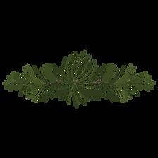 a pine laurel