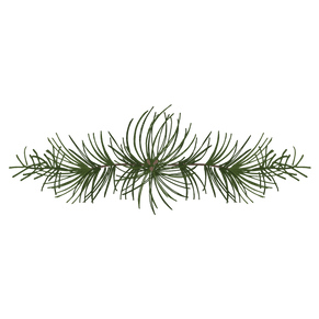 a pine branch
