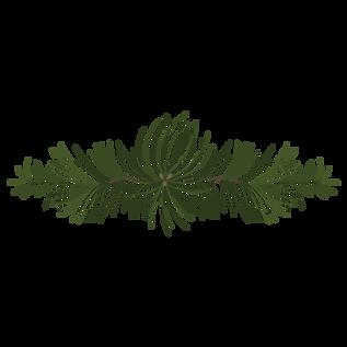 Rami di pino Abete 4