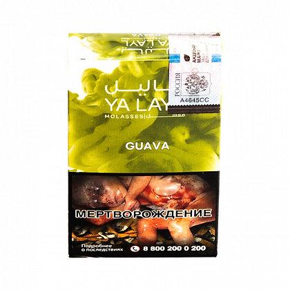 YALAYL - GUAVA
