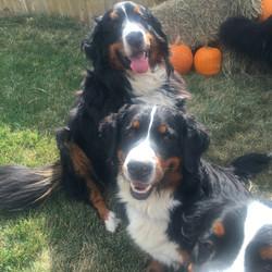 Steffi, Picaboo and Durango