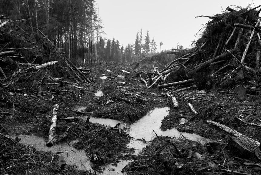 Desastres des Foret 9.jpg