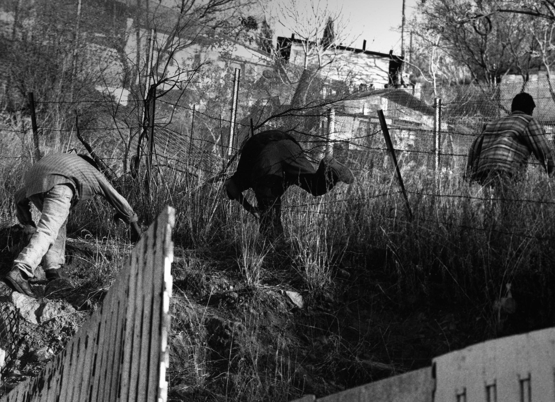 Running Through the Fence.jpg