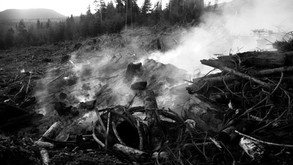 Disasters of Forests