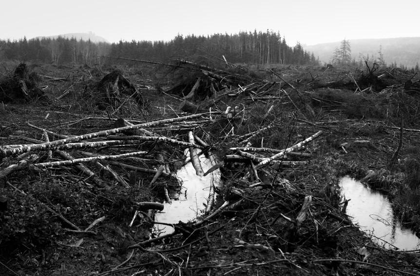 Desastres des Foret 7.jpg