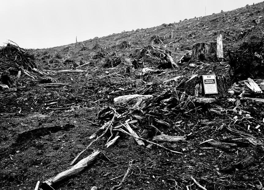 Desastres des Foret 8.jpg