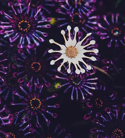 Whirligig%2520flowers%252C%2520also%2520