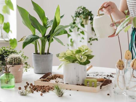 L'entretien des plantes
