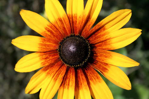 Yellow and orange flower in blooming