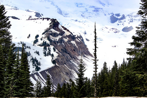 A snow covered mountain with exposed rock face with evergreen trees in the forground