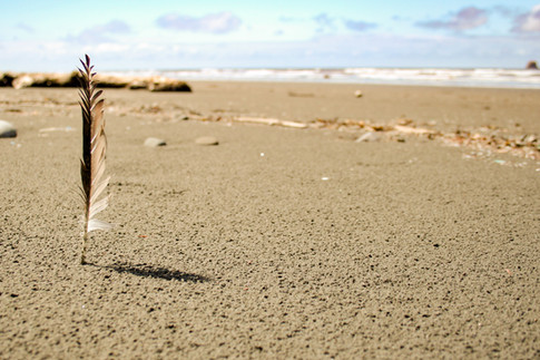 A feather standing upgright into the sand on the beach over looking the ocean