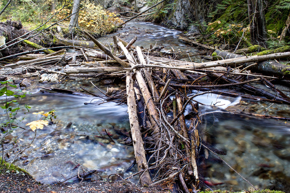 A mountain creek with logs pushed up into a pile