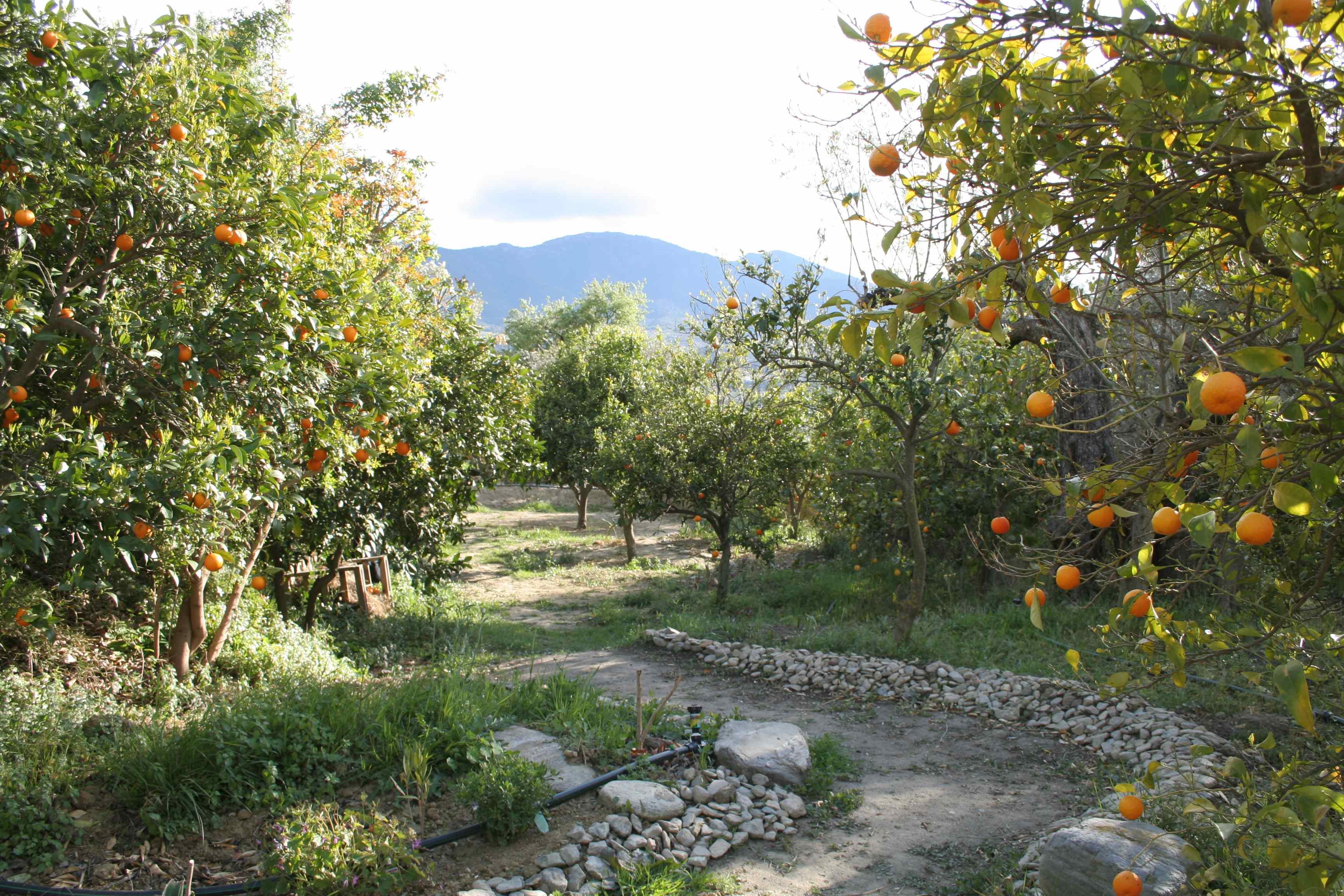 Orangeraie 2