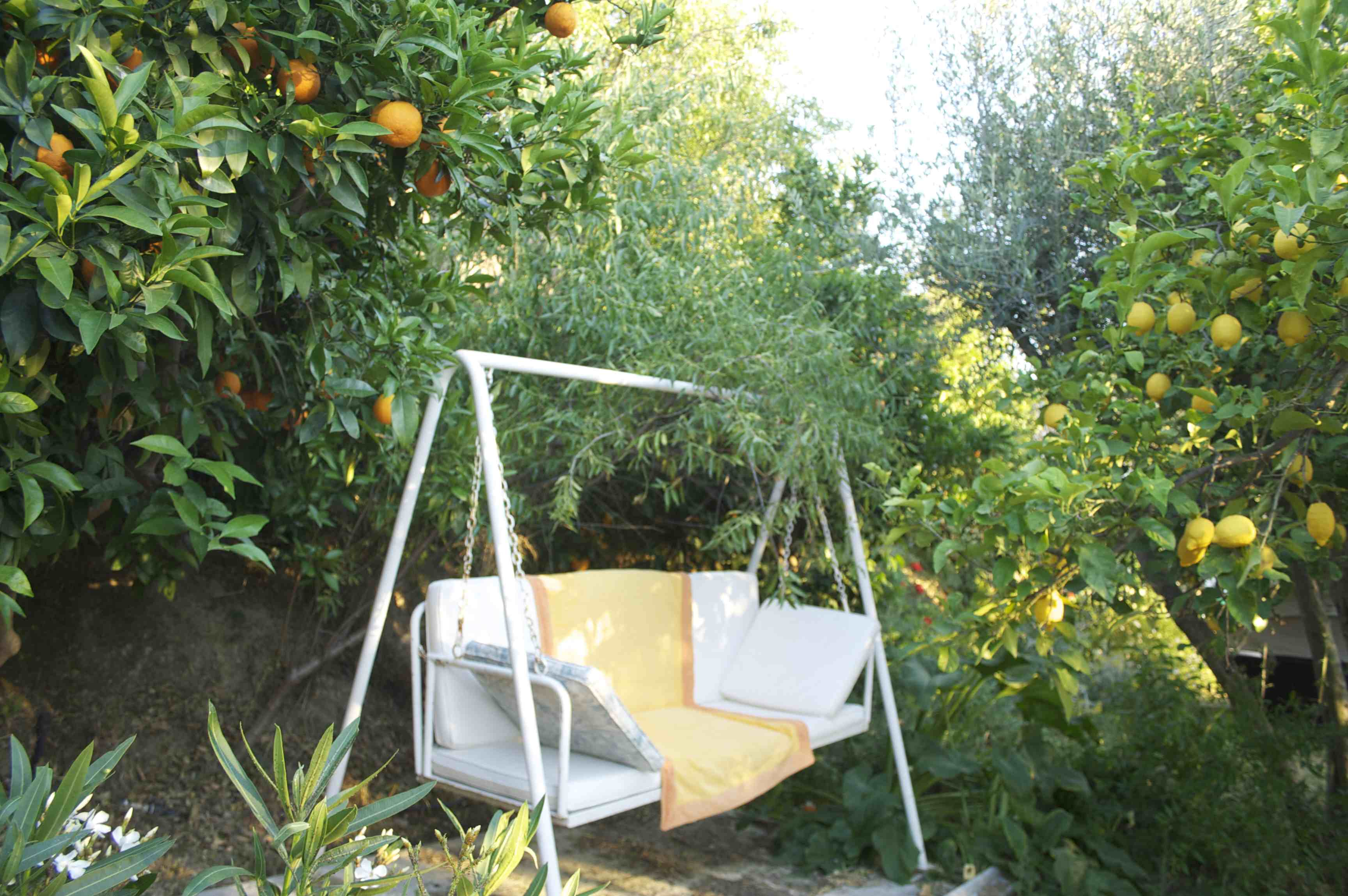 balancelle sous les orangers