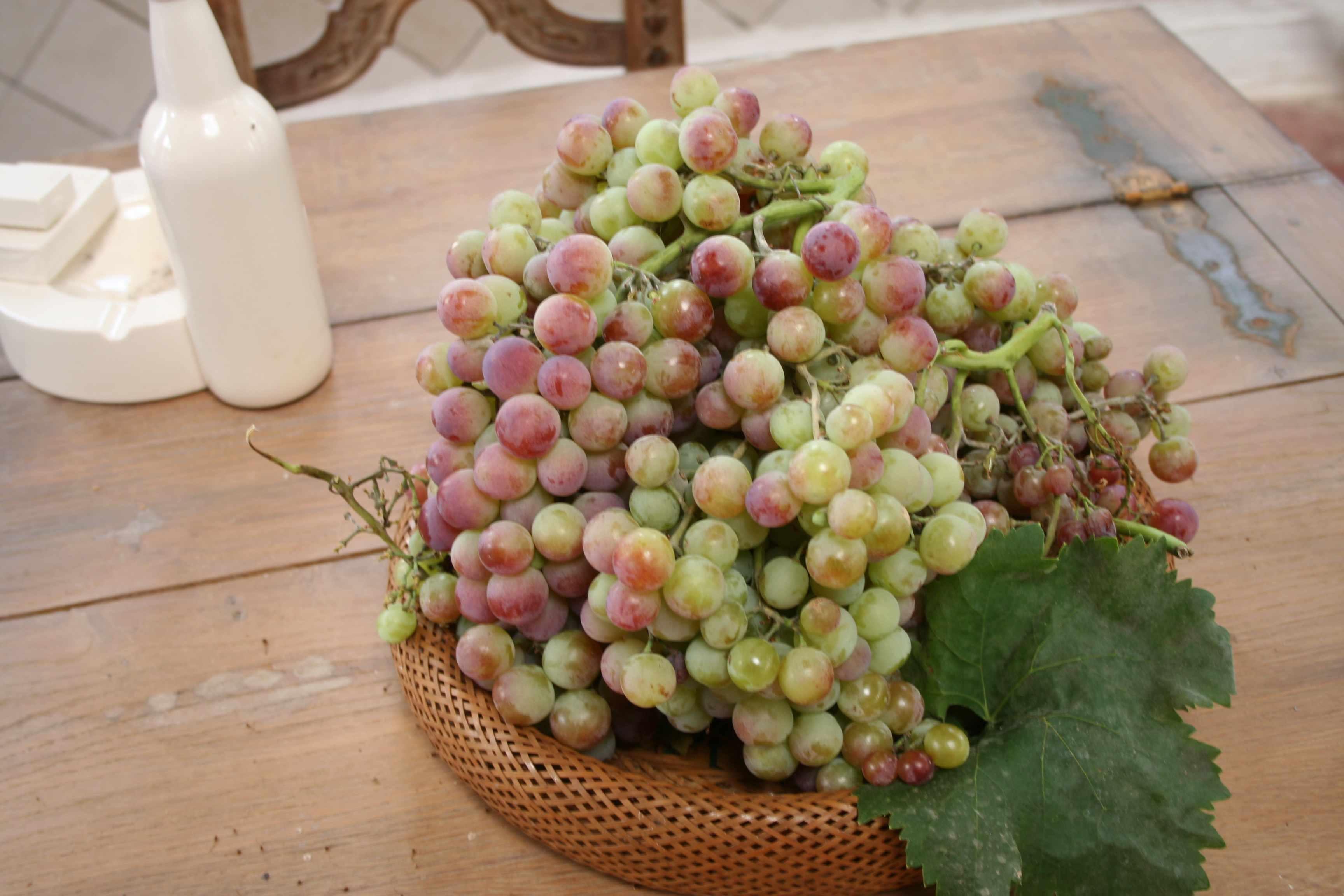 notre raisin juste cueilli