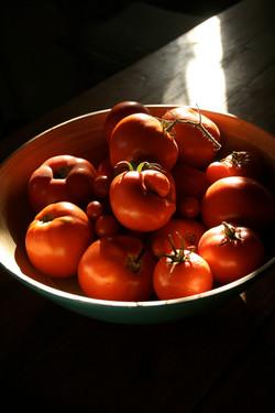 nos belles tomates 1