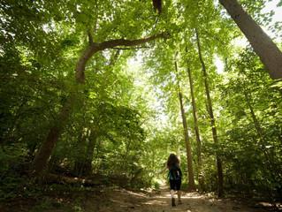 Rock Creek Park Adventures