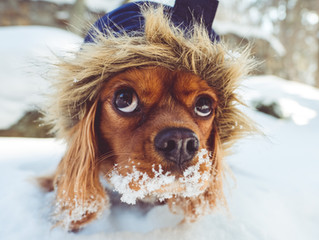 Happy holidays! Keep your pets happy this winter season!