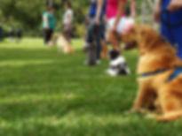 adestramento cães Curitiba