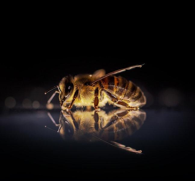 honey-bee-3930374_1920_edited.jpg