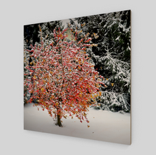 Winter dream-wood-print-front-white.png