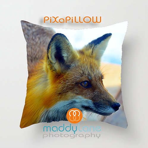 Fox - up close and personal  16216