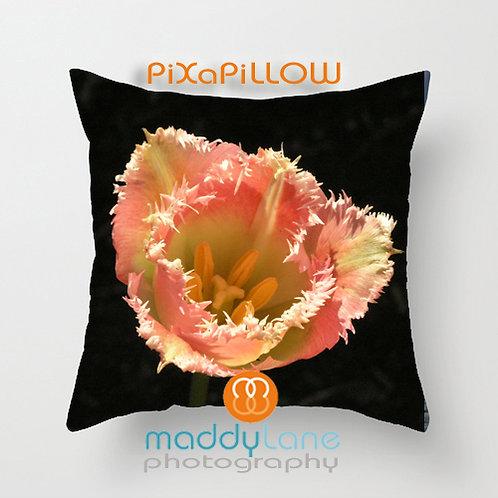 Pink on black tulip 16212