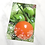 Thumbnail: One red tomato