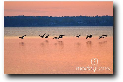 Wart art / Pastel Sunset Flight