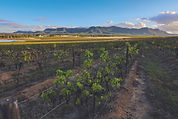 Hunter Valley-9662.jpg