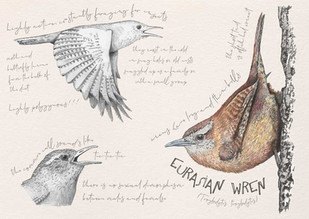 Eurasian Wren 2021