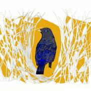 Bowerbird 2017