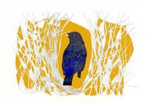 Bowerbird, 2017