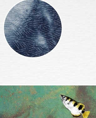 Archer fish 2018