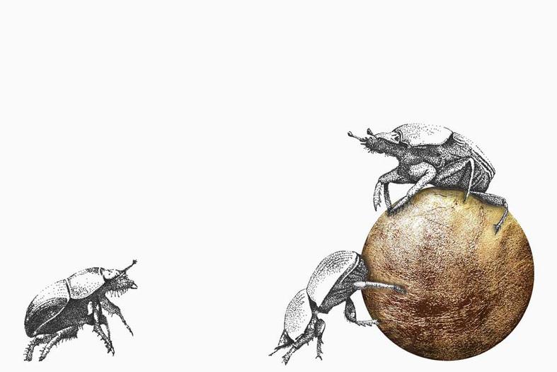 Dung beetles 2021