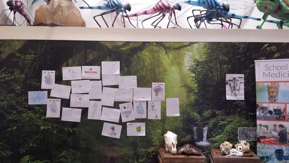 Art meets Science, Edinburgh Zoo, 2018