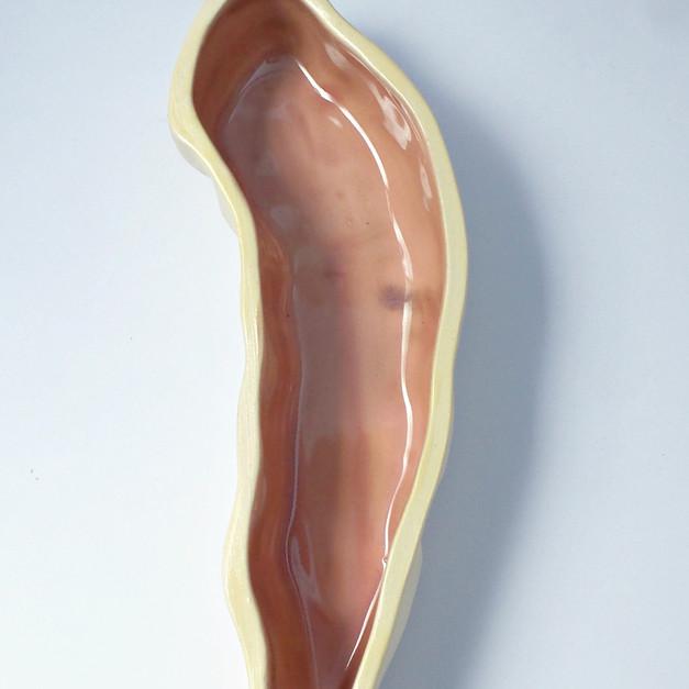 Large Intestine ii