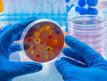 Transmission interhumaine grippe porcine